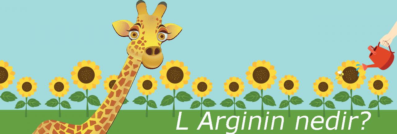 L-Arginin nedir